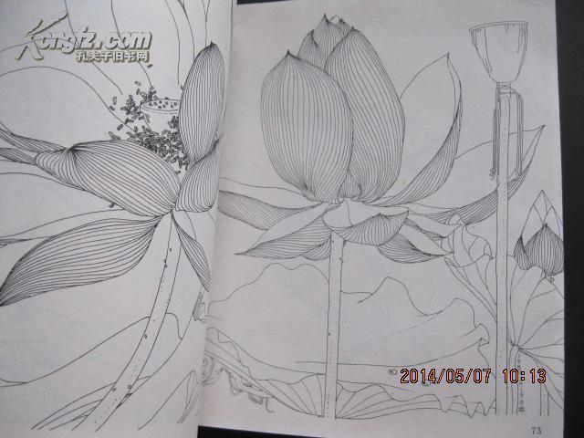 简单手绘荷花铅笔画