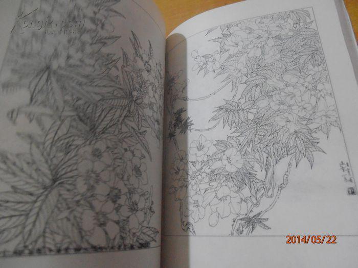 工笔花卉白描画谱图片