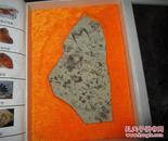 三叶虫化石(千载儒文化,亿年古化石)
