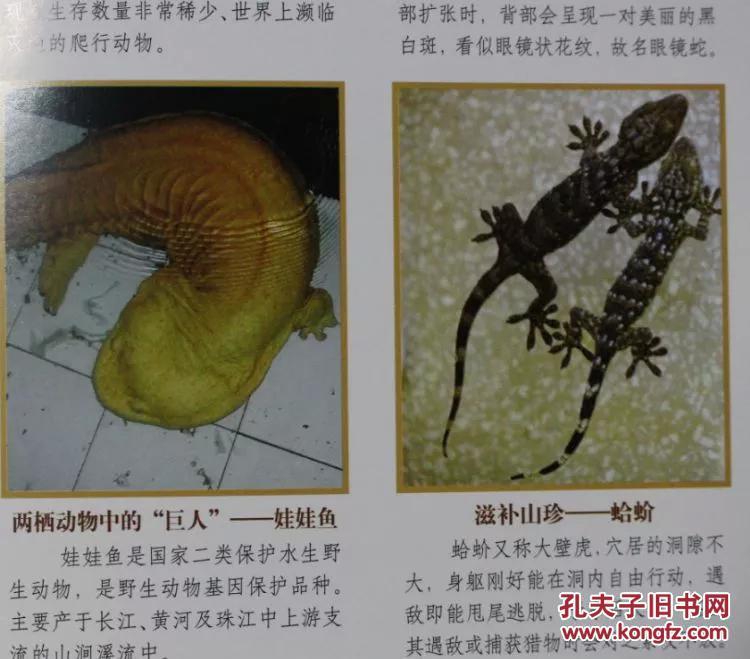《 动物百科全书》精装16开4册 线装书局 定价598元 动物百科全书