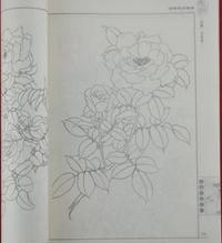 传统花卉图谱白描图案工笔花鸟画国画书籍线描绘画雕刻资料图书图片