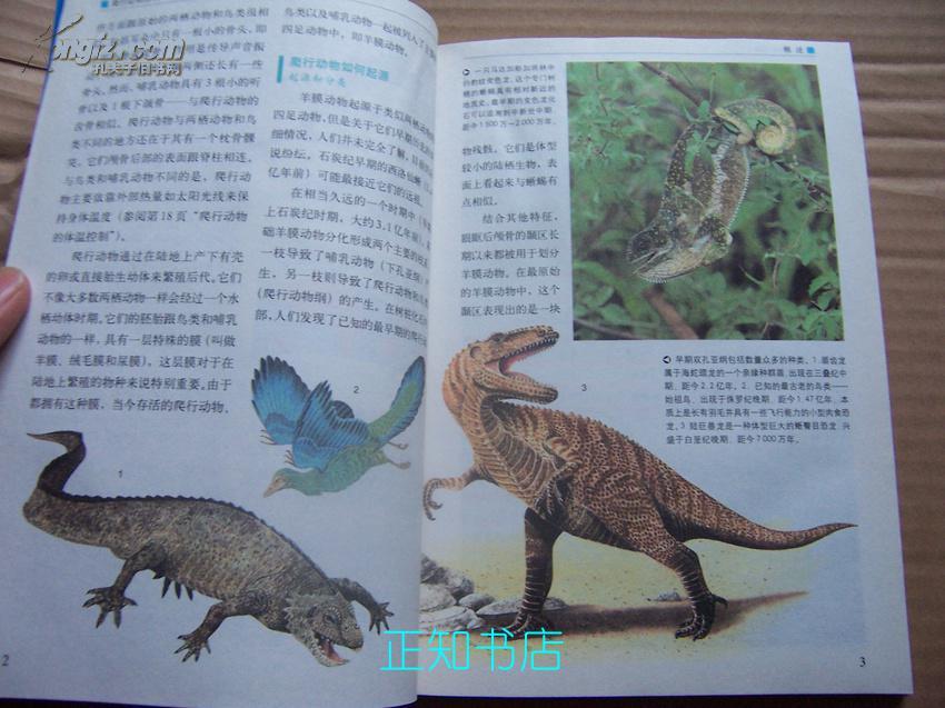青少年必读经典:爬行动物百科(彩色图解)