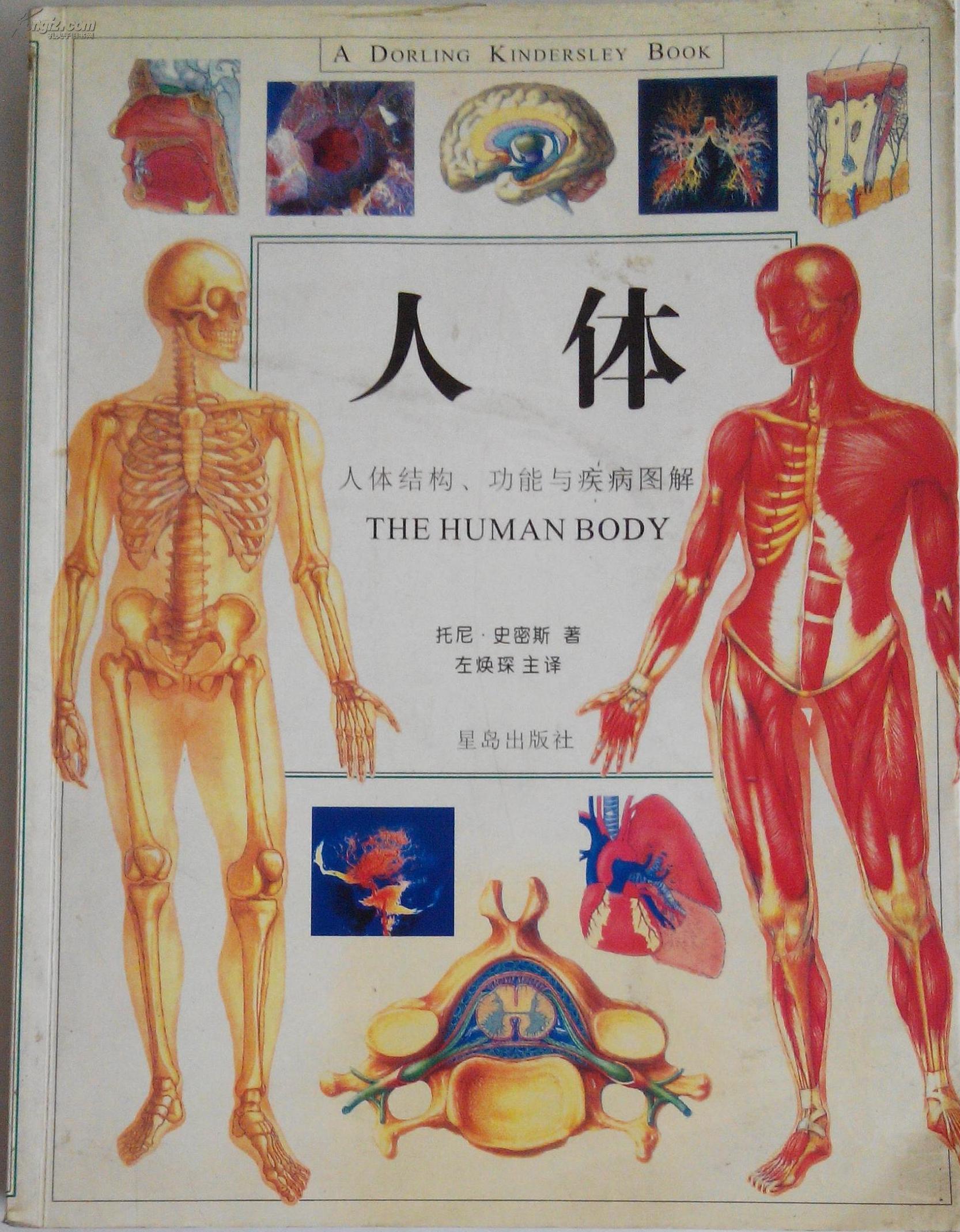 人体结构图