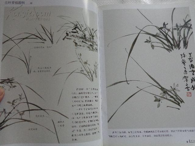 国画入门训练:兰花(写意篇)