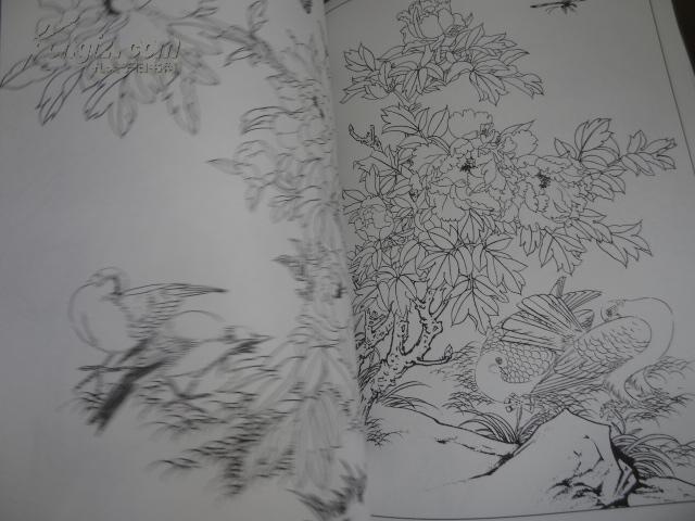 简单的牡丹花结构图