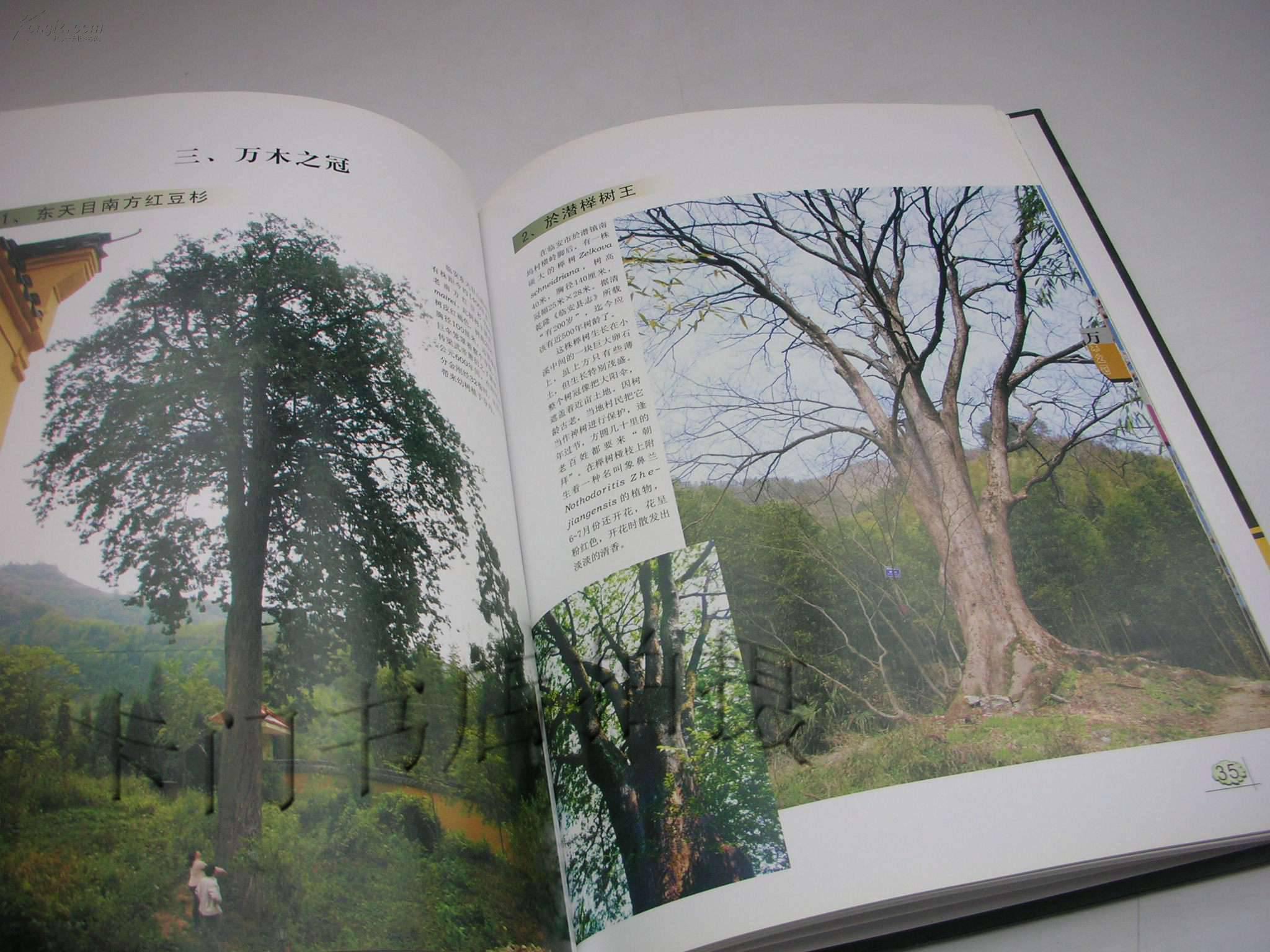 古树参天 东北黄山 丹东凤凰山 图片 170 2880x1728