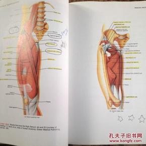 腺肌症用达英35的原理_腺肌症图片