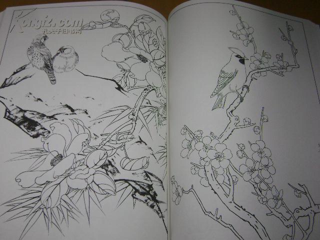 中国白描画谱 花鸟 白描花鸟画稿 花鸟白描 工笔线描画稿图片