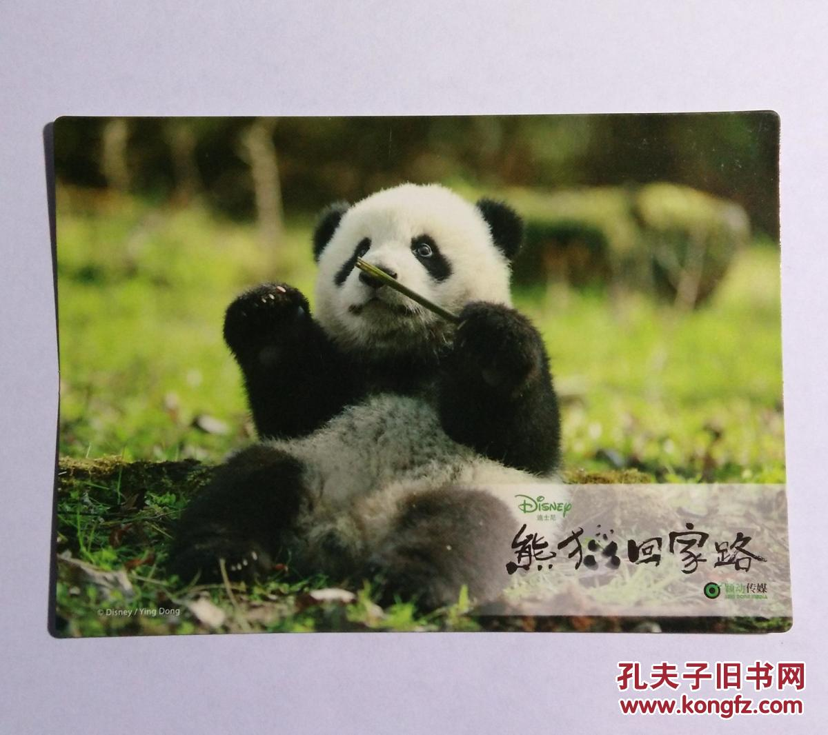 壁纸 大熊猫 动物 1200_1066