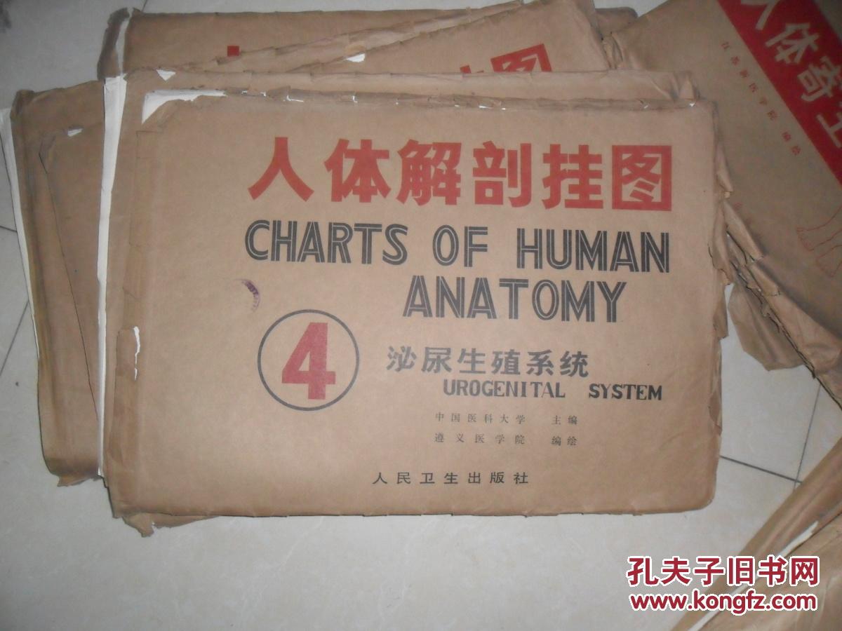 人体解剖挂图----泌尿生殖系统(全18副)