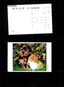小动物·明信片【9枚】