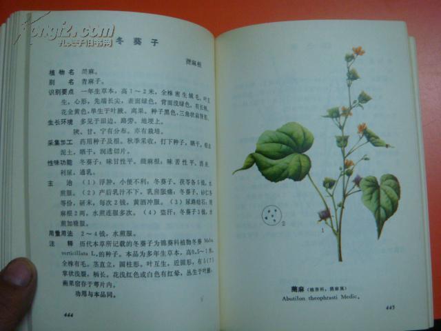 甘宁青中草药选【彩色插图】图片