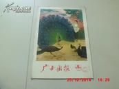 广西画报1979-1