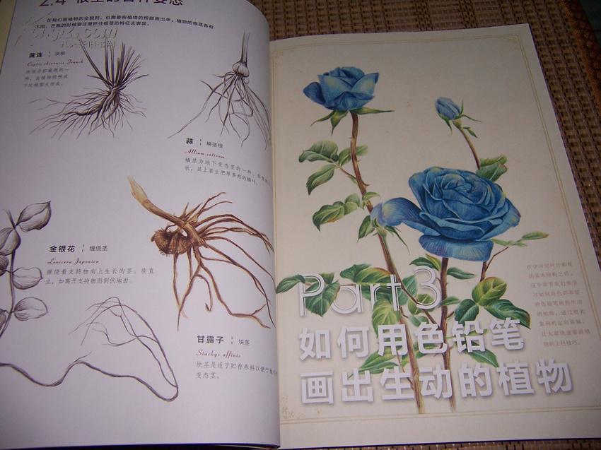 色铅笔下的植物王国图片