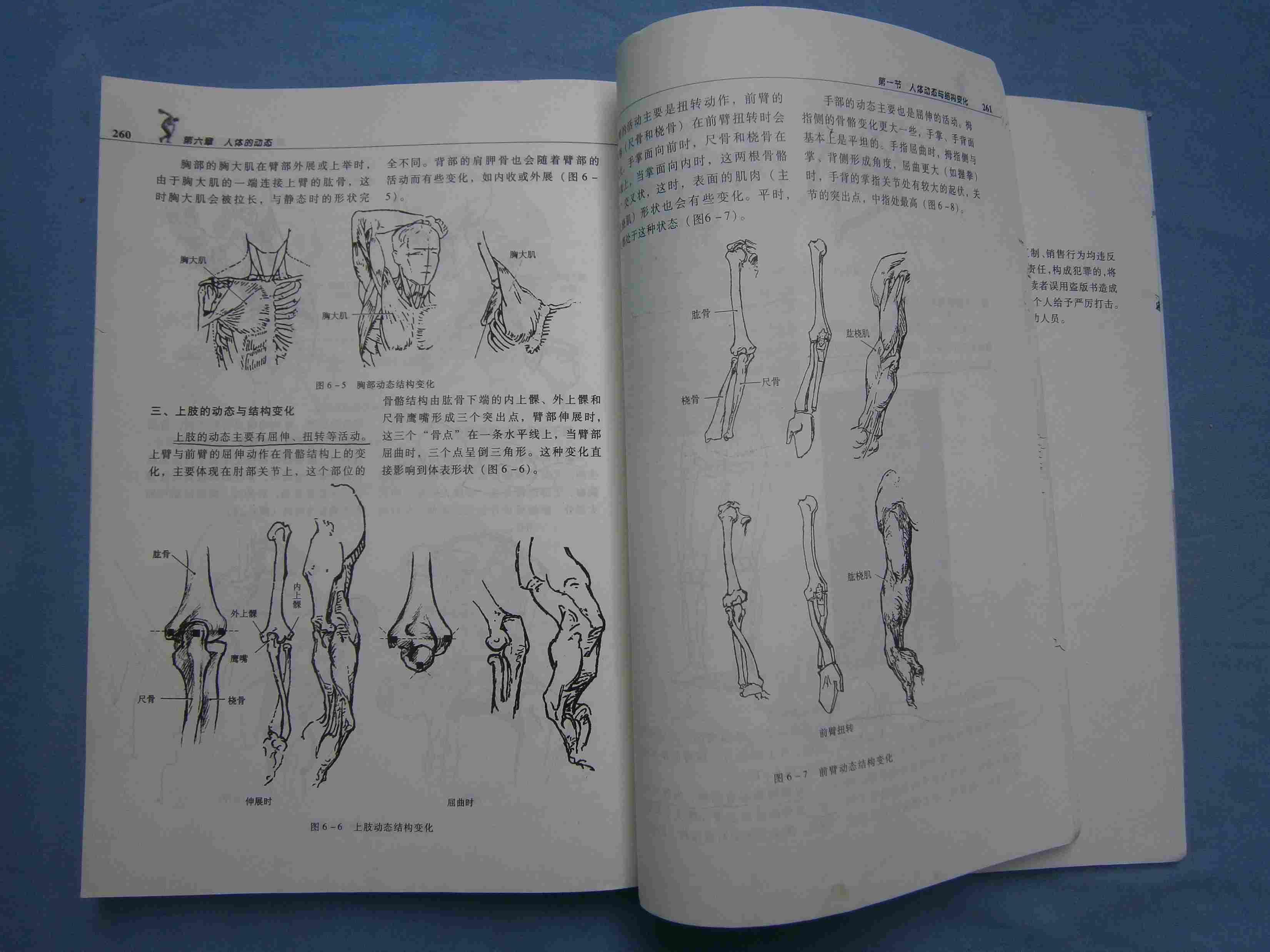 美术技法理论:透视 解剖图片