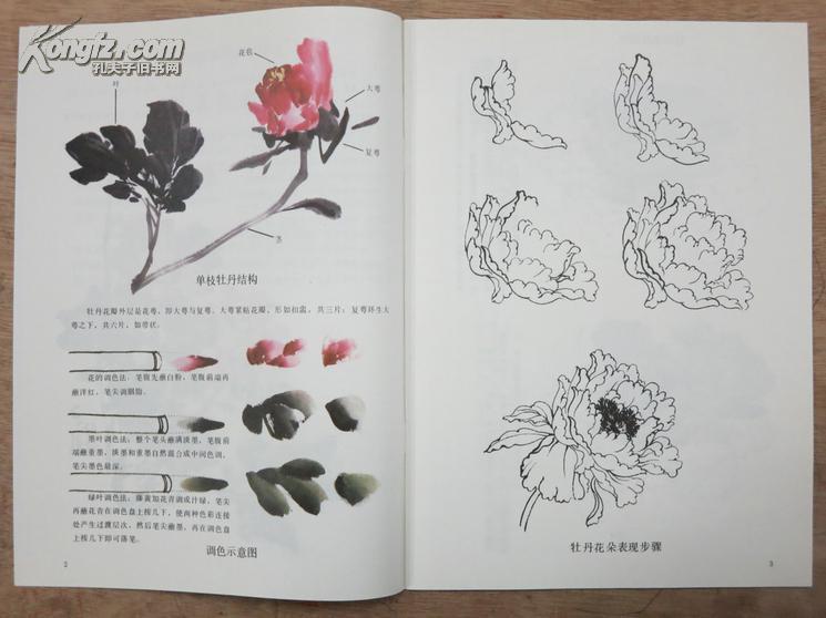 怎样画牡丹花画法技法---中国画自学丛书图片