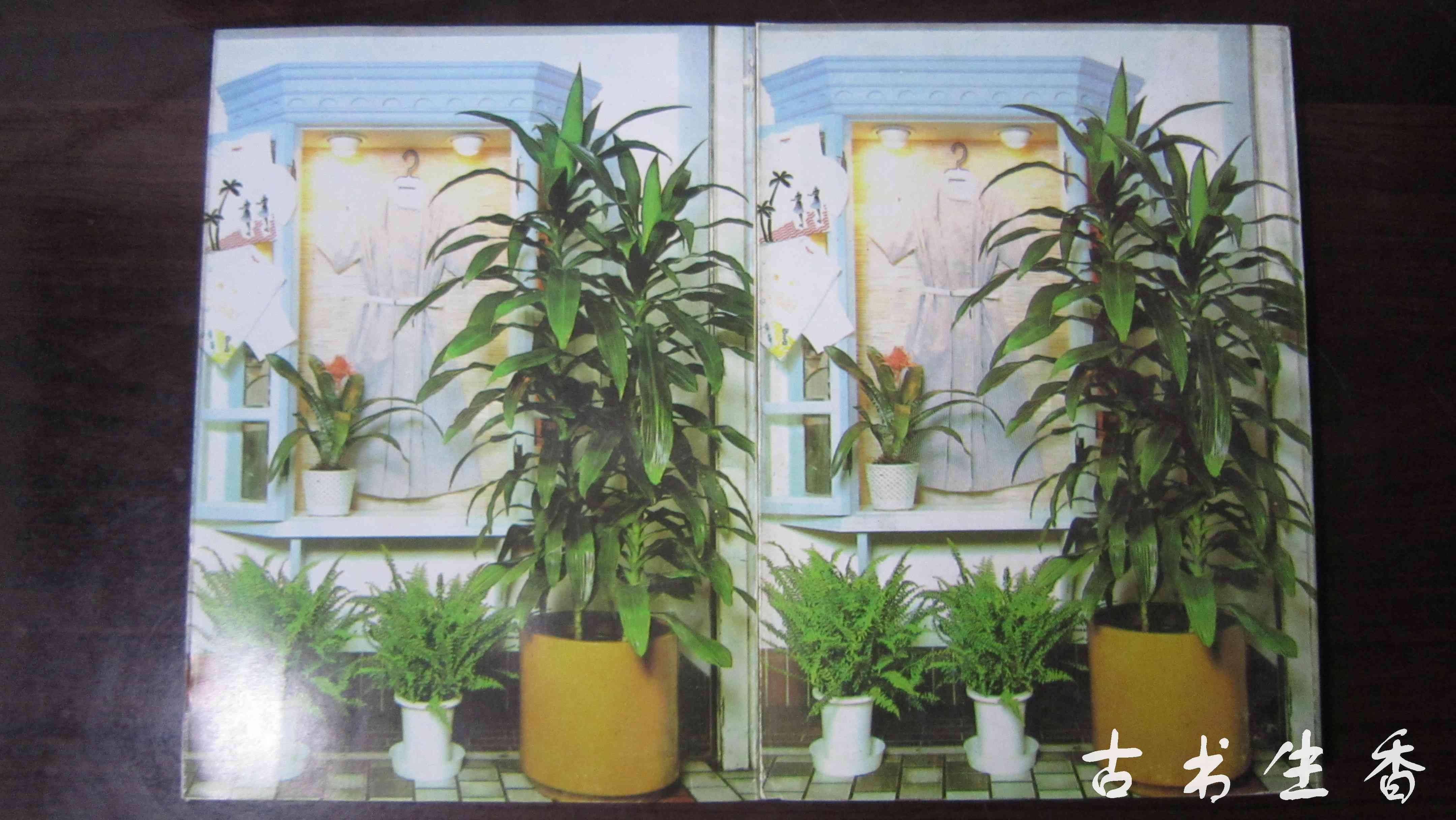 室内植物装饰与养护