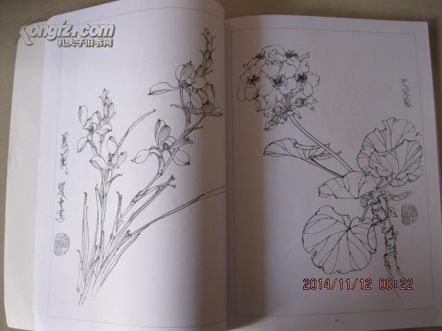 工笔花卉白描画集图片