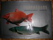 中国淡水鱼类原色图集 第一集