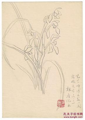 著名学者范韧庵兰花铅笔画,保真
