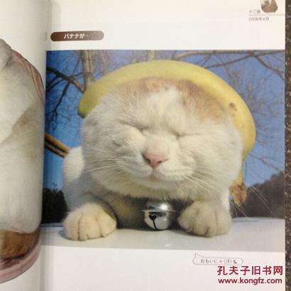 壁纸 动物 猫 猫咪 小猫 桌面 410_410