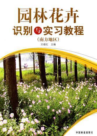 银叶菊一枝黄花,龙胆点地梅