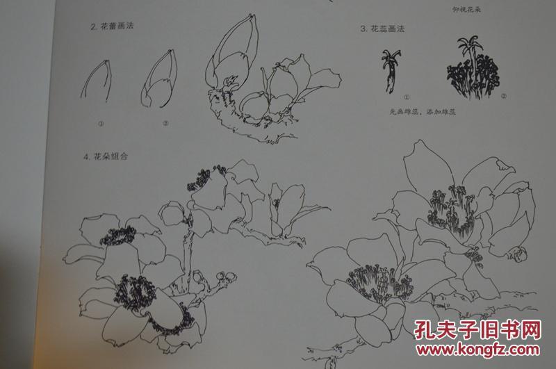 中国画技法.木棉花图片