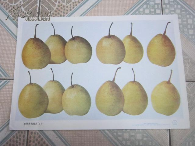 挂图类:小学低年级数学教学情境挂图38 水果剪贴图片(3)图片