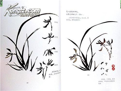 王传贺 名家作品欣赏画兰花的技法 绘画技巧