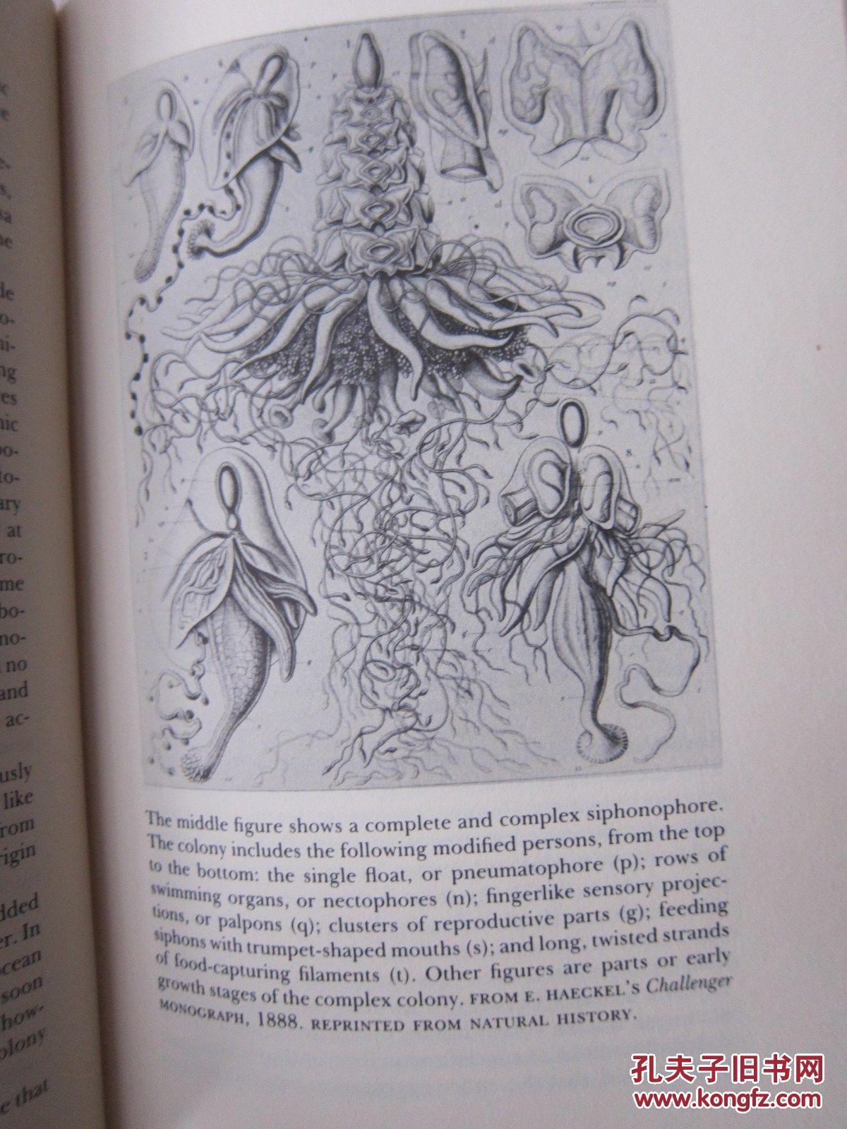 一版一印1985年纽约出版, 自然科学火烈鸟 插图版,精装带书衣 476页