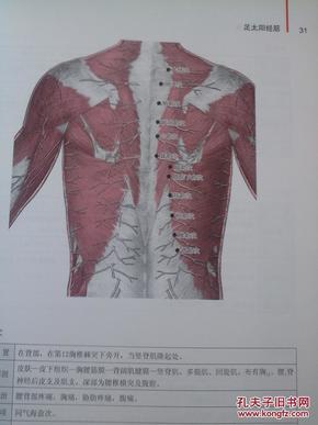 人体经筋循行地图 : 图解学习人体十二经筋解剖,循行 : 完全图解版