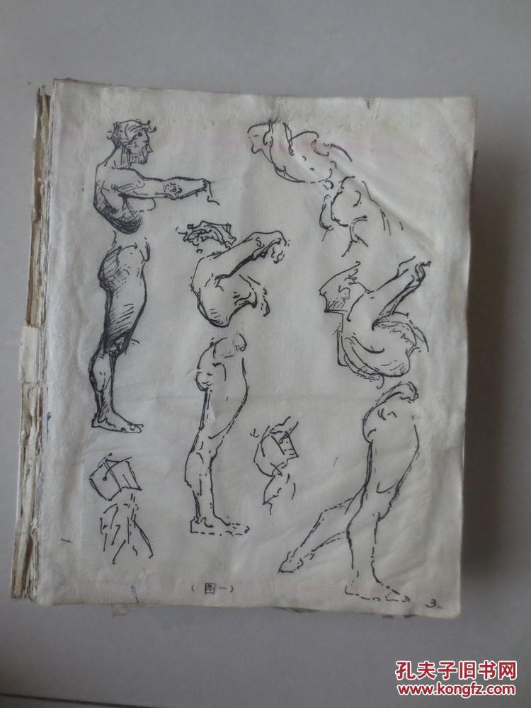 钢笔手绘《艺用人体结构解剖》