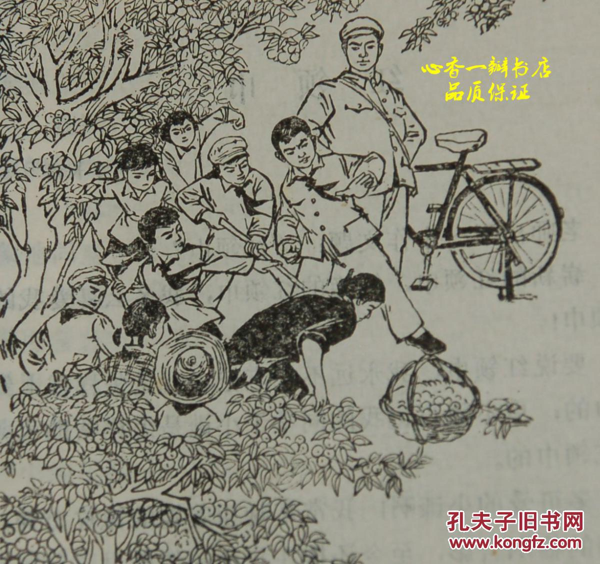 小树绿油油 1974年1月一版一印 自然旧9品 见描述 有精美插图 该书不多见