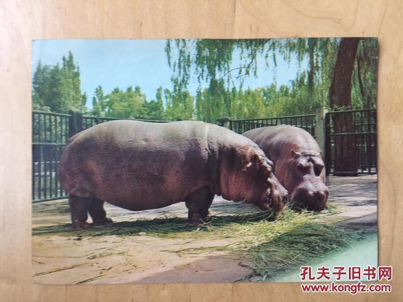 北京动物园  导游图