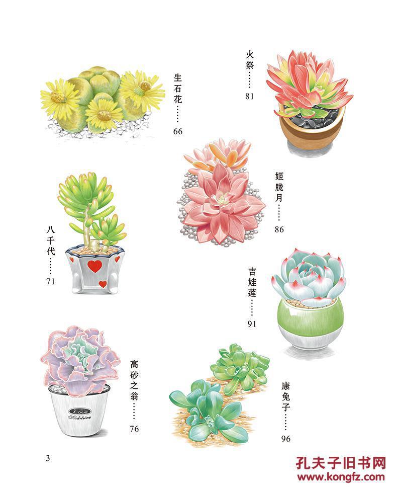 正版 浪漫彩铅系列 多肉植物篇 各种植物素描彩铅画色图片