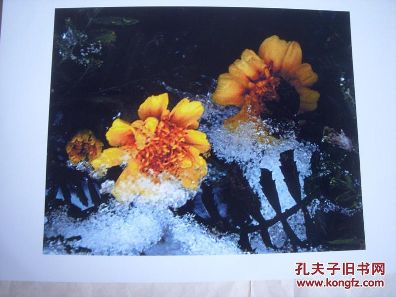 3955 ...摄影家参展照片 【30厘米x21厘米 】