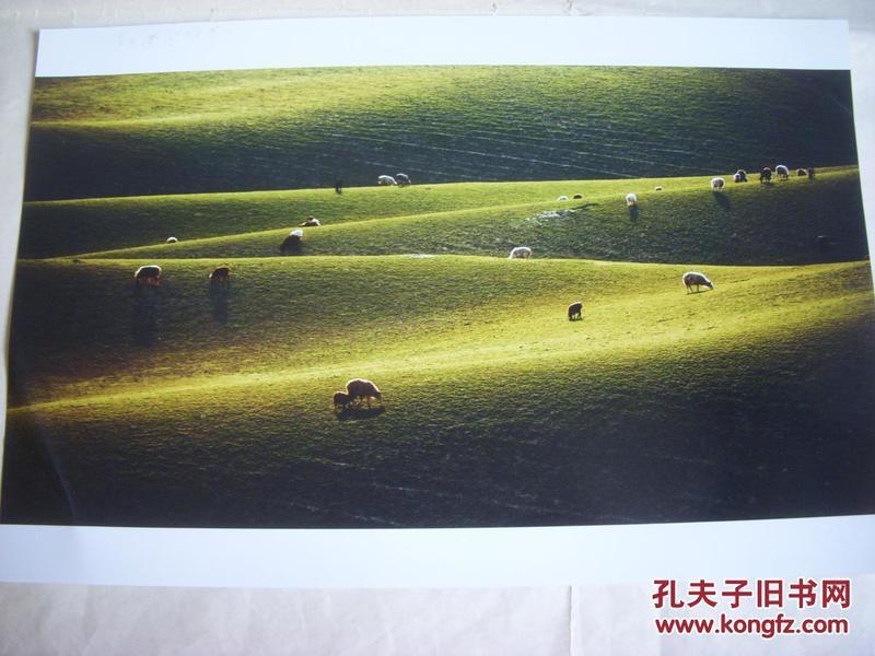 3989 ...摄影家参展照片 【30厘米x21厘米 】