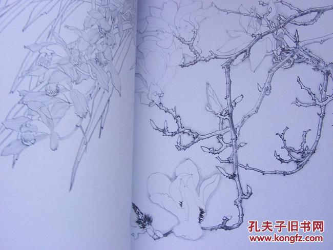 正版 毕彰老师讲国画-工笔花卉白描技法图片