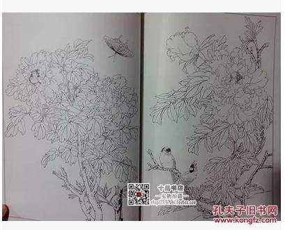 牡丹 中国白描画谱/李晓明 张桂徵/国画线描花卉画法工笔临摹底稿图片