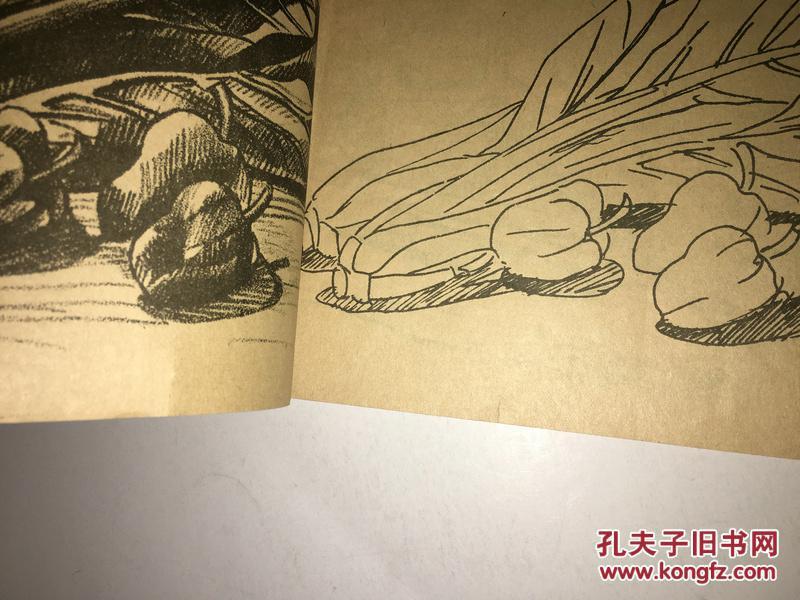 z47 大众铅笔画(第二册)