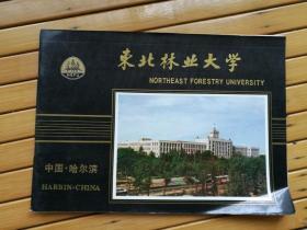 东北林业大学(简介  横翻 16开  40页  中英文版)