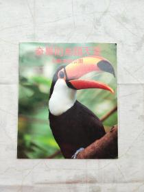 奇异的鸟类天堂——裕廊飞禽公园