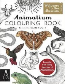 Animalium Colouring Book 插画师Katie Scott动物图案涂色书