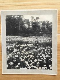 照片 日本和服美女老照片一张 印刷品