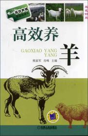 高效养殖致富直通车:高效养羊