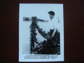 向科技高峰攀登 建国三十五周年重大科技成果集锦 (配合国庆宣传稿之二):20、中国科学院海洋研究所的科研人员在观察海带的生长情况(新华社新闻展览照片1984年)