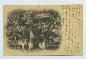 清代中国广西崇左市龙州地区参天古树,法国领事办公人员合影老明信片