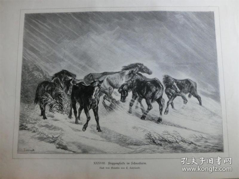 【现货 包邮】1879年木刻版画《草原上暴风雪中的骏马》(Steppenpferde im Schneesturm) 尺寸约40.8*27.5厘米(货号 101113)