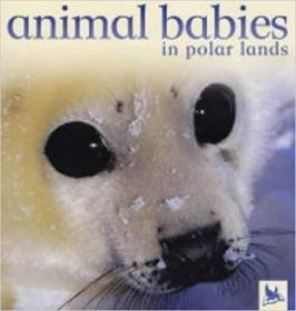 Animal Babies in Polar Lands (极地的幼兽) (原版进口)