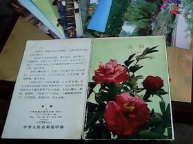 洛阳 明信片(1套10张)